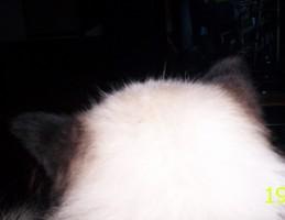 Uit het leven van een autistische kat 1: tussen kaasknabbels en nierdieet.
