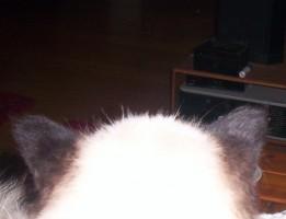 De autistische kat en zijn innerlijke gevangenis
