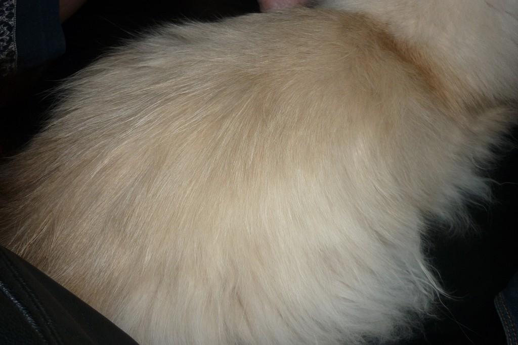 Een autistische kat als tortilla.